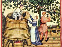 Битва вин