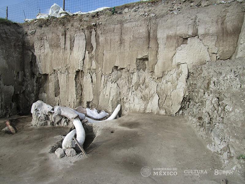 mamut-06.jpg