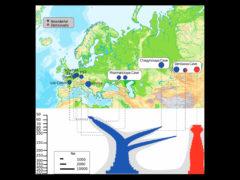 Миграции неандертальцев из Европы на Алтай