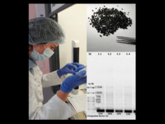 Археология и генетика растений