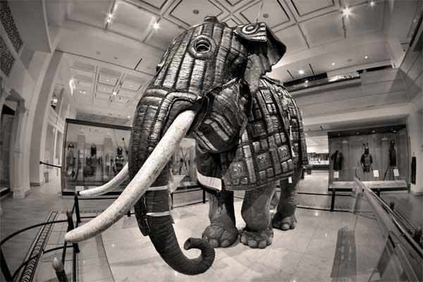 boevoj slon_002